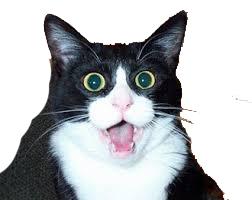 Surprised cat 3